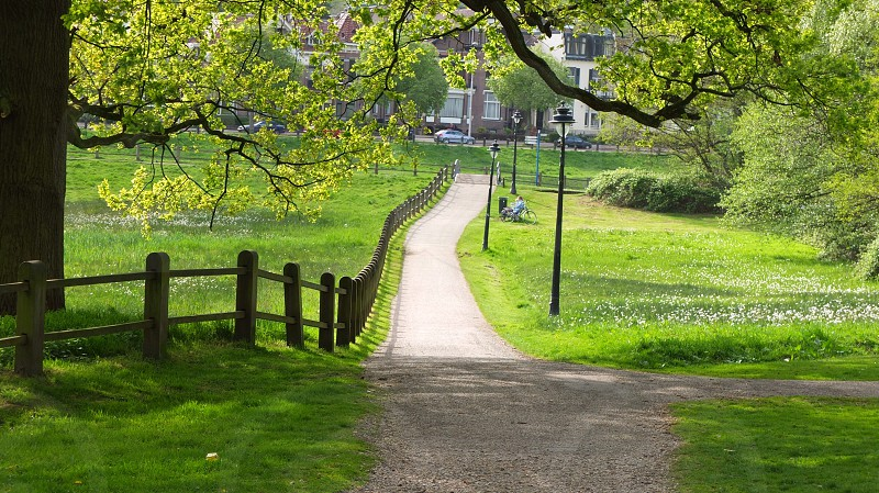 pathway with green grass near brown fence at daytime photo