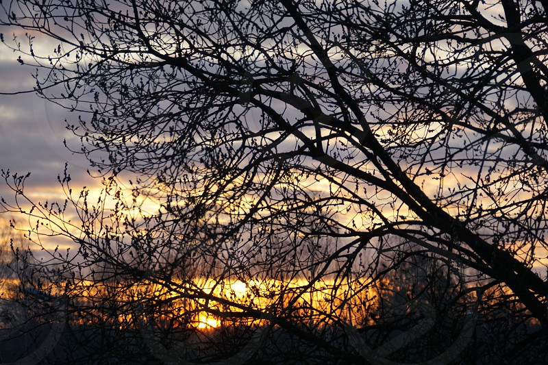sunrise early spring photo
