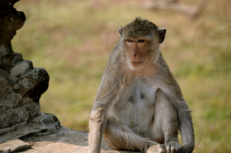 primate sitting on rock formation selective focus photograph photo