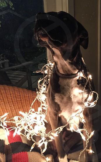 Christmas caroling... photo