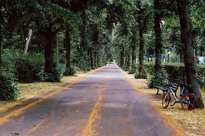 On the road  way forward  asphalt empty road street alley trees photo