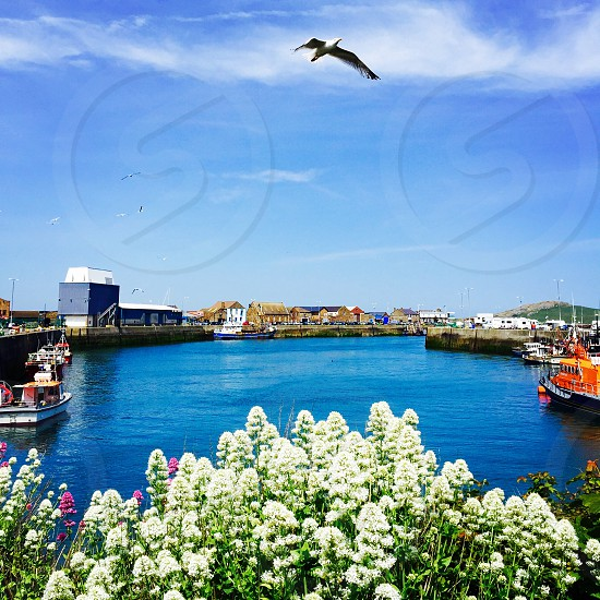 port sea sky fly blue landscape boats daytime birds flowers water seagulls ireland howth travel vacation photo