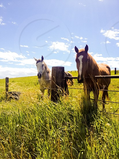 2 horses standing by the fence photo