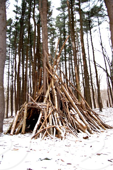 beige tree trunks formed indian house photo