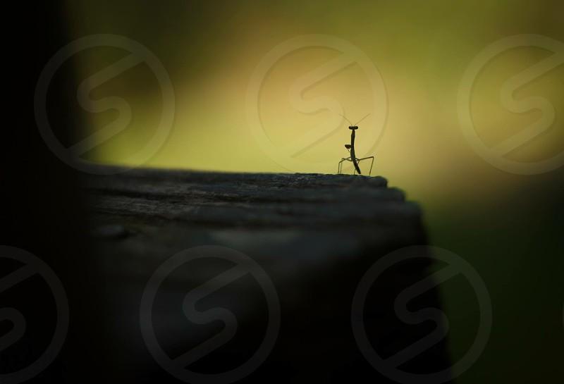selective photography of black praying mantis photo