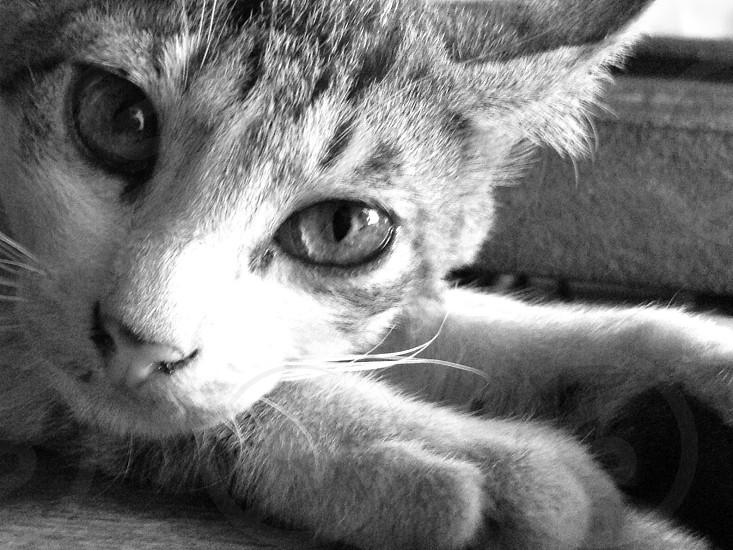 A portrait of a kitten photo