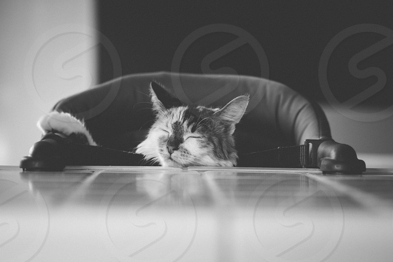 cat sleeping on highchair greyscale photography photo