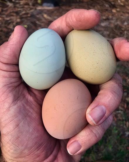 Farm eggs organic farming fresh natural  photo
