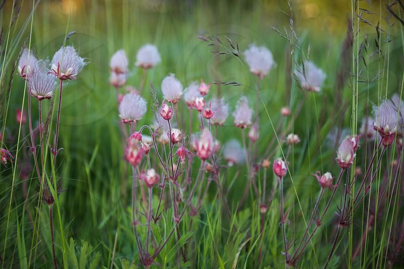 Nature summer flowers flower green beauty calmness calming reflections reflective  photo