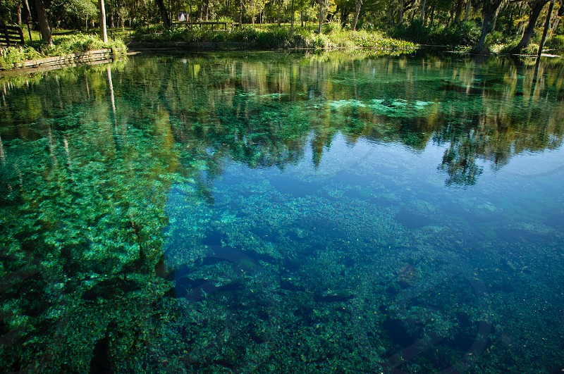 crystal blue natural spring in Florida with reflection photo