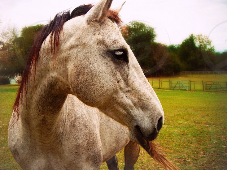 white and brown horse photo