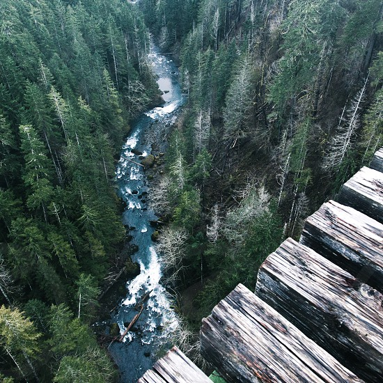 green pine trees by the riverbank in high angle view photograph photo