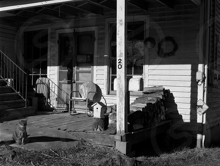 cat porch metal chair bird house wood pile light angle 20 shadow photo