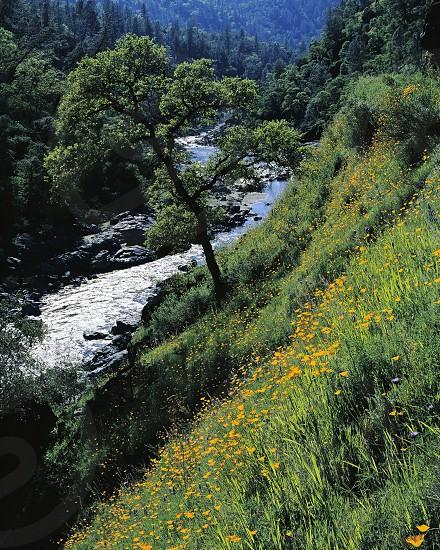 Yuba River photo