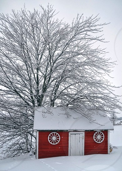 Snow tree lone one red white landscape building snowstorm Vermont picturesque nature beauty soft beautiful cold winter snowing round window branch branches roof door photo