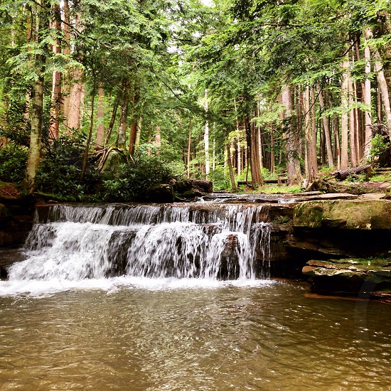 Rollover Falls in Swallow Falls State Park waterfall forest Maryland  photo