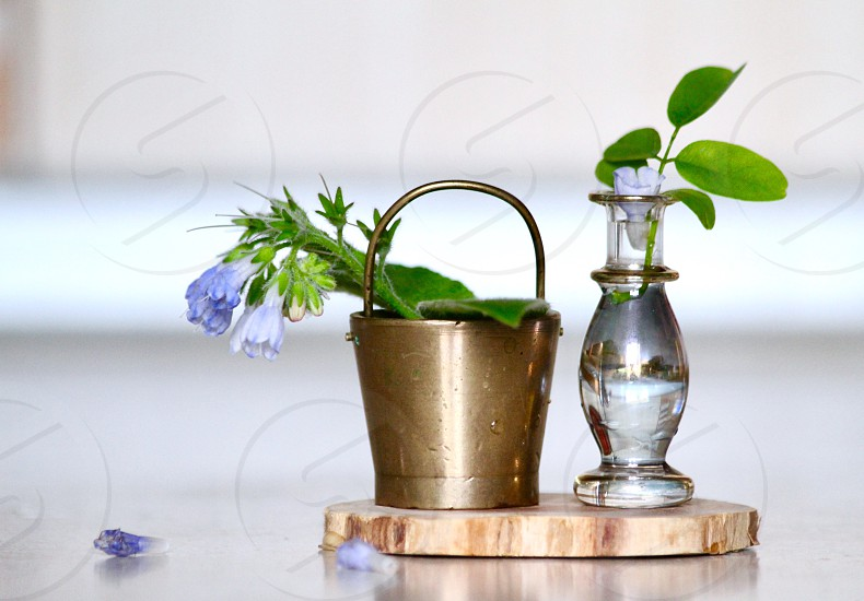 Tiny vases of flowers blue flowers decoration creative plant home little small object  photo