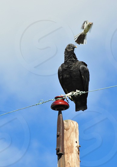 black vulture on wire under white and black bird flying during daytime photo