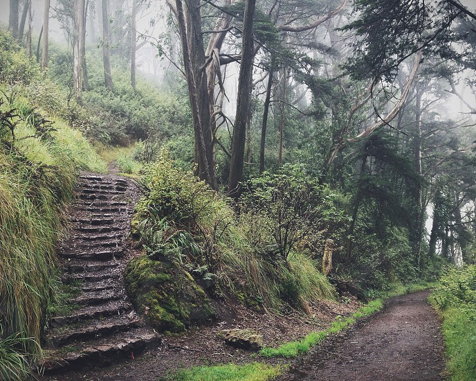 gray stone staircase on forest pathway photo