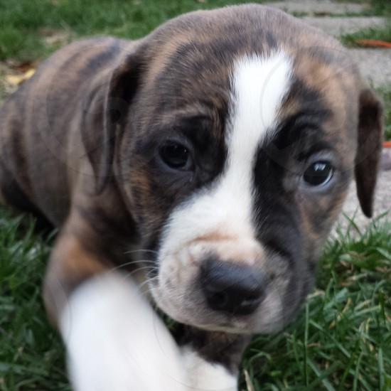Puppy eyes 2 photo
