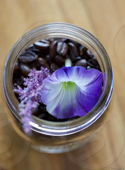 Flowers Inside A Jar.  photo
