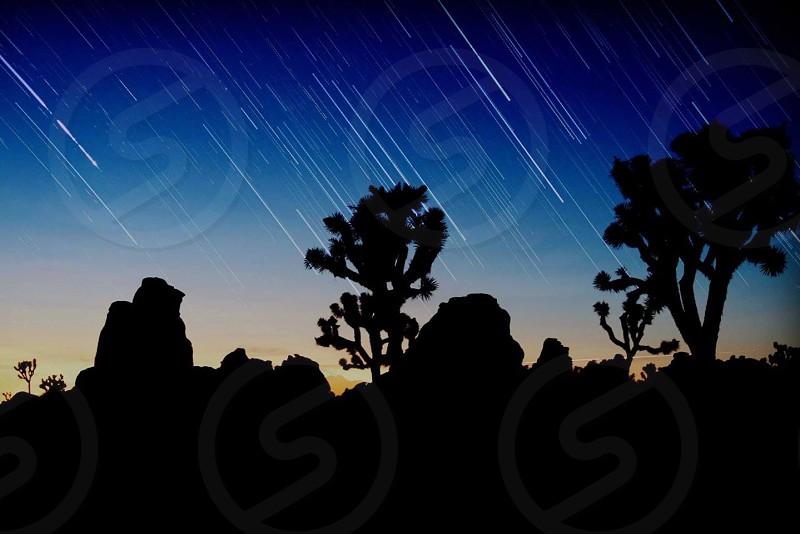 Joshua tree national park photo