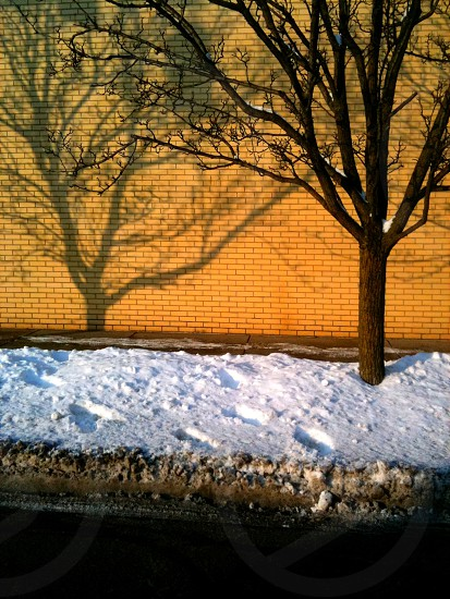 Winter Tree Shadows City Scape Indianapolis photo