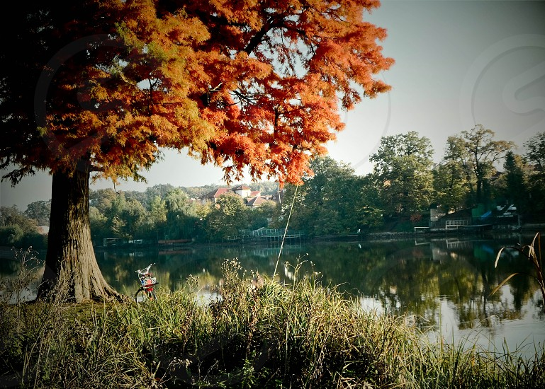 bycle autumn fall leaves lake silence photo