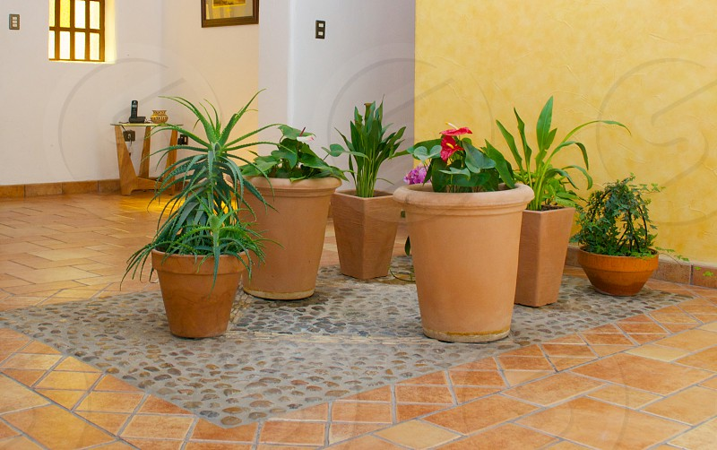 plants in brown pot photo