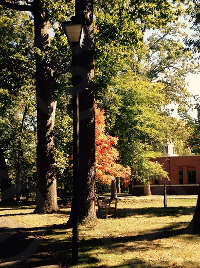 A perfect fall setting photo