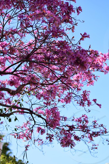 Spring is in bloom photo
