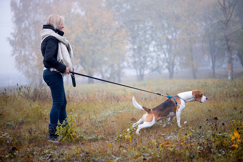 A woman walking with her beagle dog in the city park photo