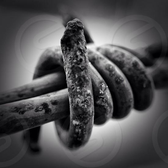 rusty barbwire photo