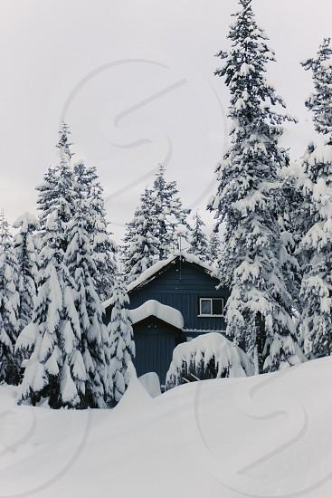 winter snow cabin trees  photo
