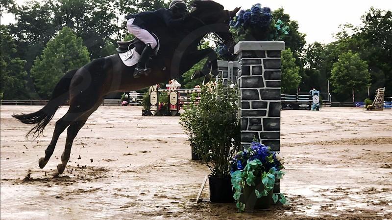 Horse horse life horse show show jumper equestrian horse photography equestrian photography equestrian life sports competition equestrian event Grand Prix  photo