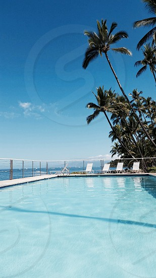 white and blue swimming pool near coconut trees photo