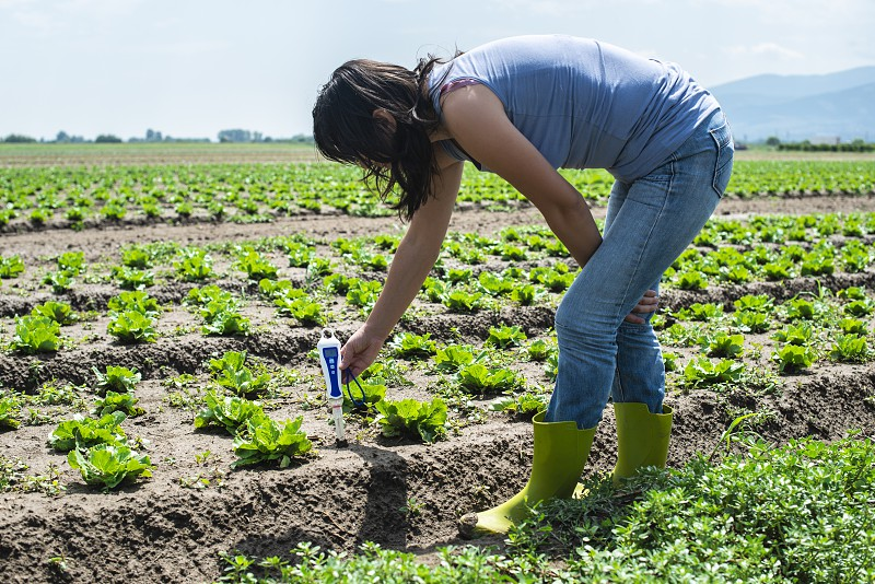 Woman use digital soil meter in the soil. Lettuce plants. Sunny day. Plant care in agriculture concept. photo