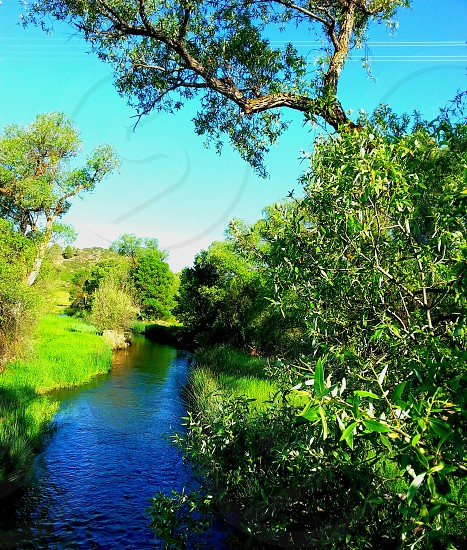 The landscape along the river is abundant in lush green plantlife photo