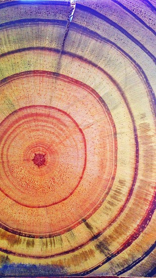 Vibrant crosscut pine photo
