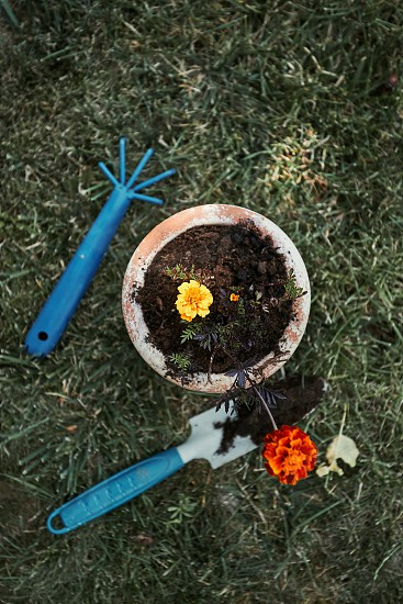 Gardener replanting a plant into a new pot. Top view of pot with flower. Using tools rake and shovel. Real people authentic situations photo