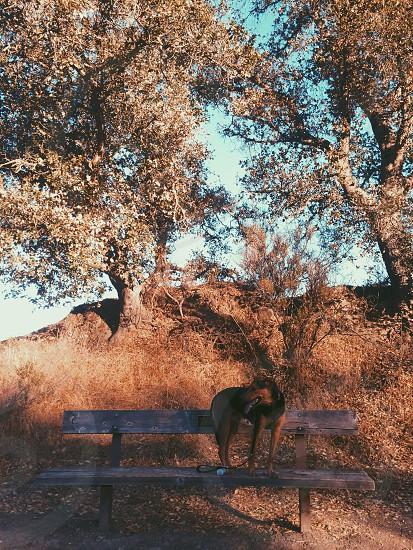 Dog Lafayette ca bench park photo