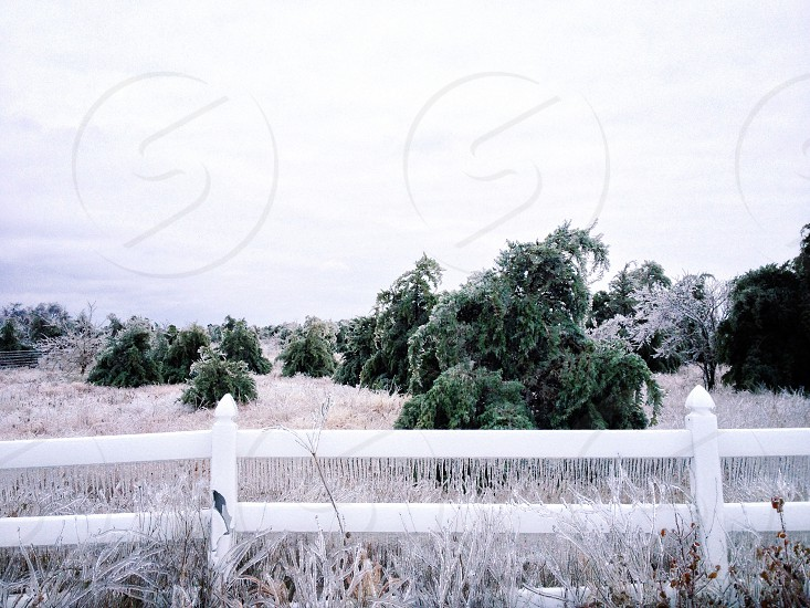 white wooden fence and green trees photo