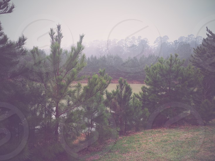 Forest in the fog photo