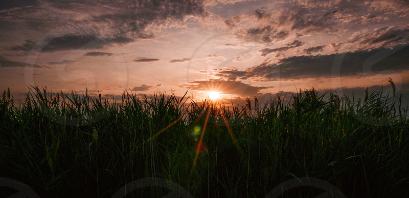 Beautiful sunset sky with sun beams over green plants. photo
