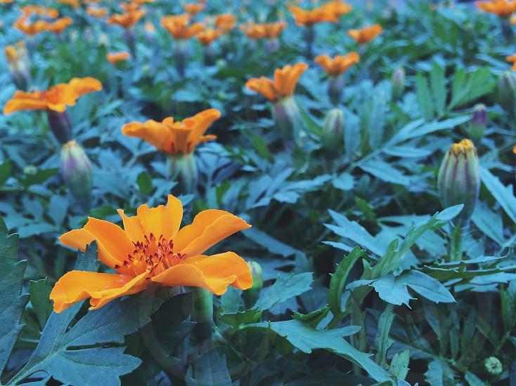 high definition shot of orange flower photo