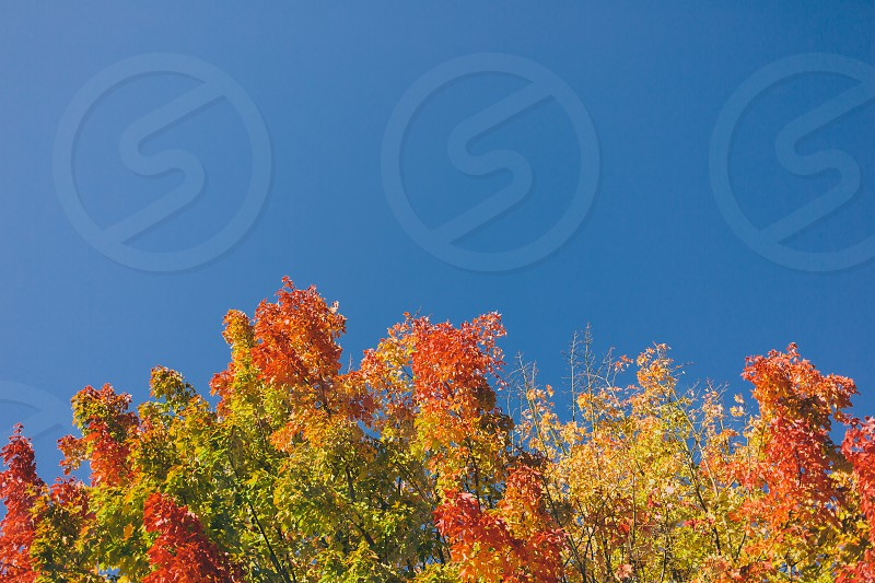 red and green leaf under clear blue sky photo
