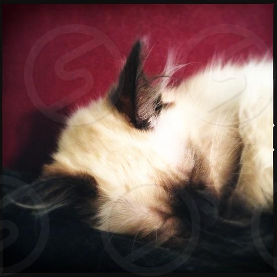 Sleeping kitten photo