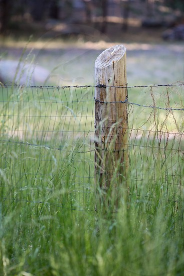 fence post in field photo