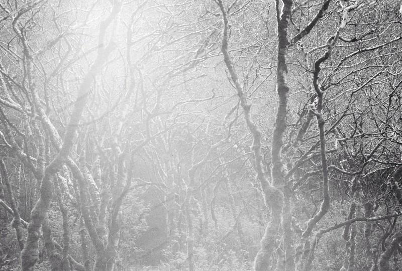Shot on 35mm film. photo