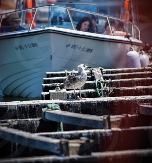 Bird standing on muscle harvesters in a Marina in Spain photo